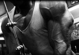 Muskelaufbau Training – Tipps, Übungen, Trainingstechniken