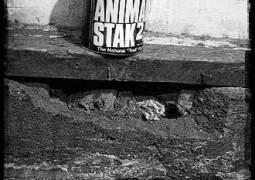 Alpha Test Programm #2: Produkt x02/Animal Stak
