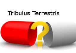 Tribulus Terrestris – Wirkung, Nebenwirkungen, kaufen