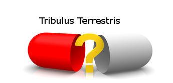 Sportnahrungs Shop mit Tribulus Terrestris als Testosteron Stimulation